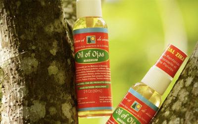 Les propriétés et les bienfaits de l'huile d'Ojas, appelée aussi Ojas ou huile de guérison royale (PART 2/2)
